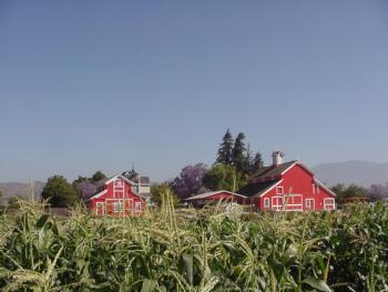 The Hansen Barns