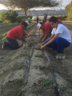 student farm-planting