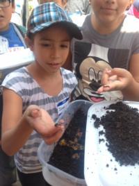 Create a worm compost bin